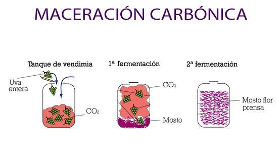 maceracion carbonica